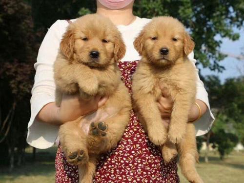 湖州宠物诊所,湖州宠物寄养,湖州宠物绝育