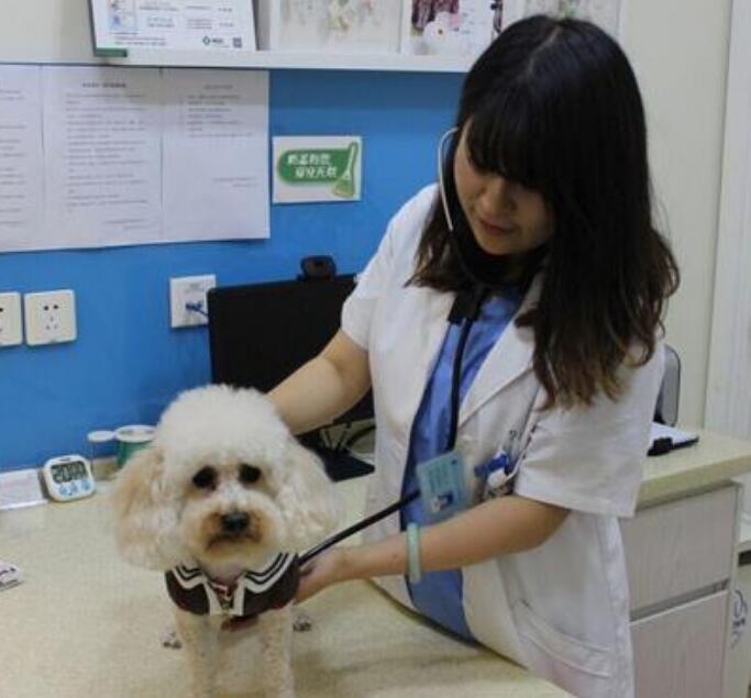 安吉宠物绝育哪有,安吉宠物诊所